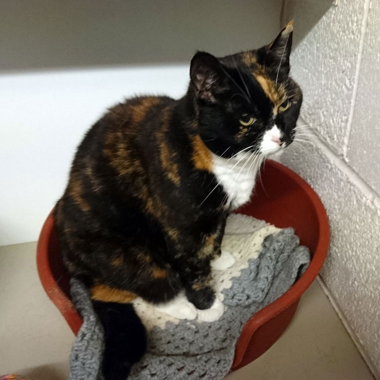 Skyecroft_Cattery_Image_1