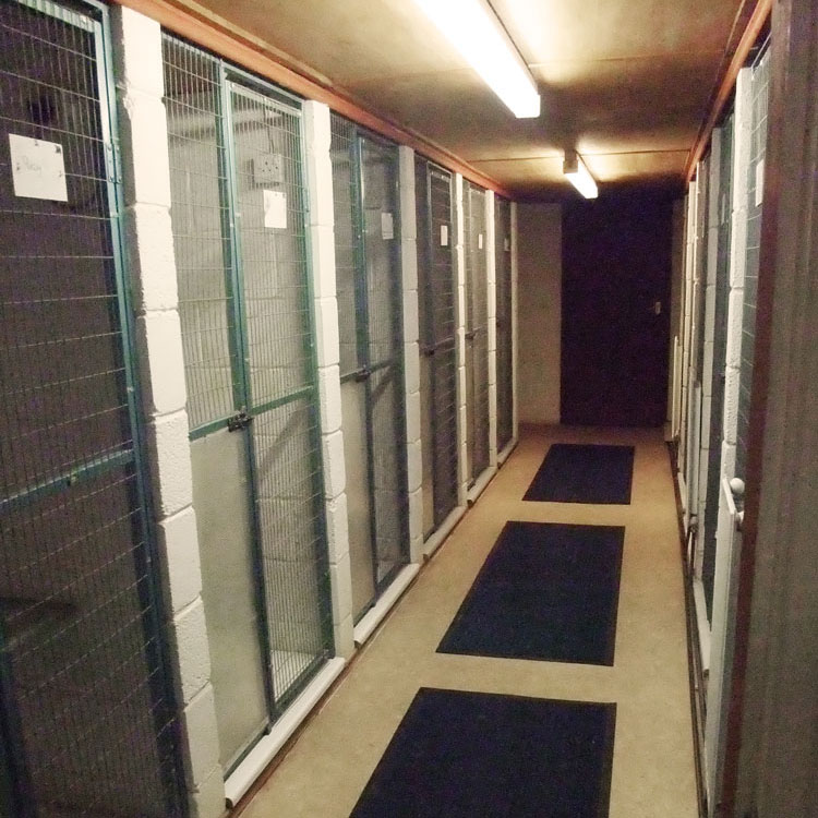 Skyecroft_Cattery_Image_2