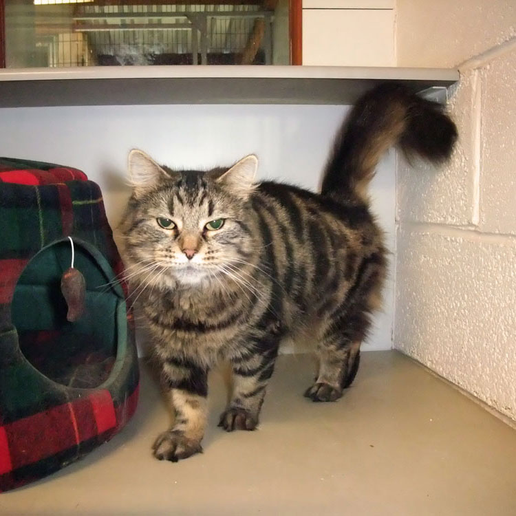 Skyecroft_Cattery_Image_3