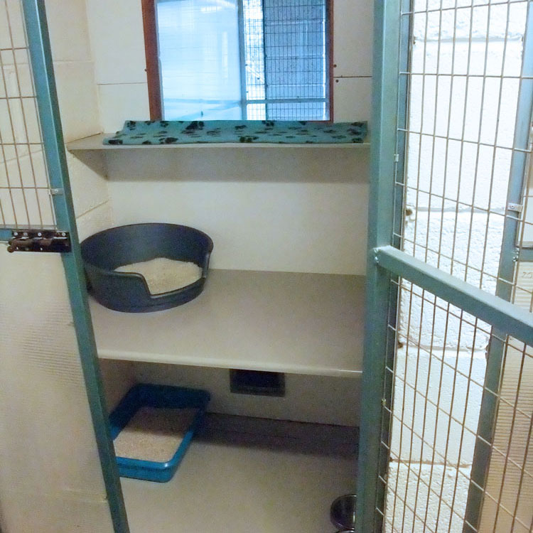 Skyecroft_Cattery_Image_4