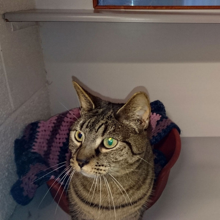 Skyecroft_Cattery_Image_5