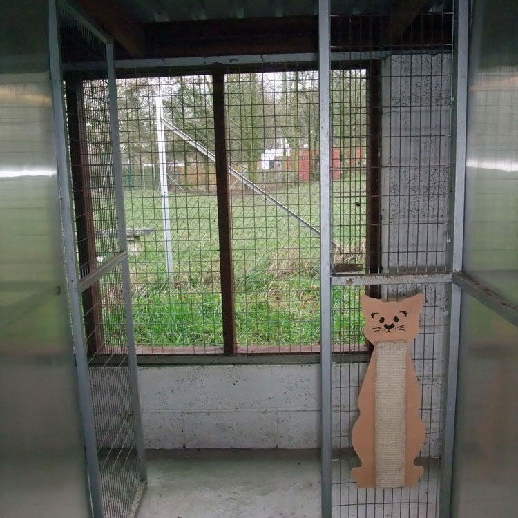 Skyecroft_Cattery_Image_6