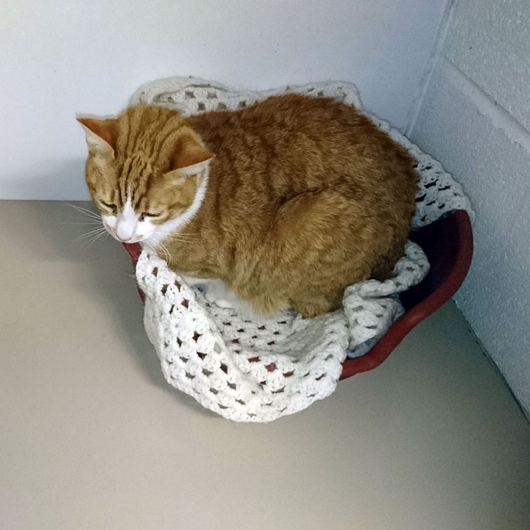 Skyecroft_Cattery_Image_7